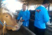 Empat KTT di Rembang jadi Binaan Semen Indonesia