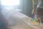 Dikira Belut, Bocah 14 Tahun Tewas Digigit Ular