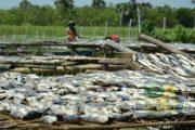 Imbas Kelangkaan Garam, Pengusaha Ikan Asin Kalang Kabut