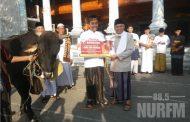Pemkab Rembang Sumbang Sapi Seberat 7 Kwintal