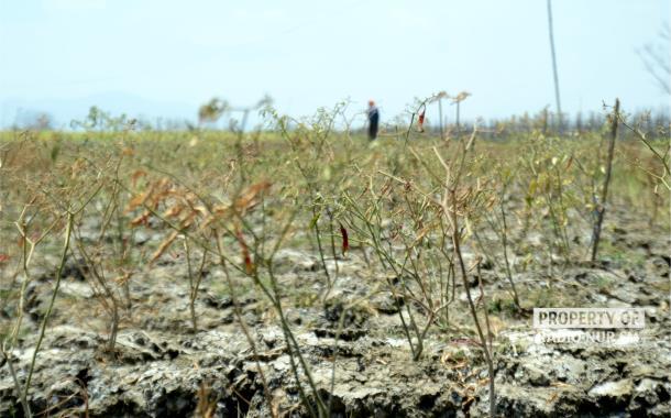 Satu Desa di Rembang Sudah Melapor Kekeringan