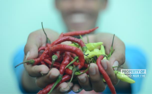 Harga Cabai Merah di Rembang Makin