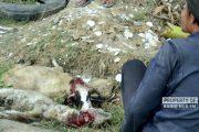 Serangan Anjing di Rembang, Bukan Kali Pertama