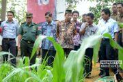 Tiga Desa di Rembang Mulai Kembangkan Budidaya Rumput Raja