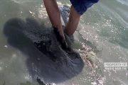 Bupati Rembang Juga Pernah Merasakan Lumpur Hitam dan Bau di Pantai Wates