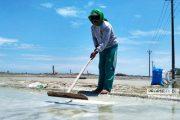 Sejumlah Petani Masih Nekat Produksi Garam