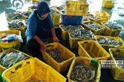 Nelayan Libur Melaut, Harga Ikan di Rembang Meroket