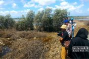 Kasus Pembalakan 7 Hektare Lahan Mangrove 2 Tahun Lalu, Baru 1 Tersangka yang Muncul