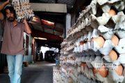 Harga Telur Hari Ini Turun di Rembang