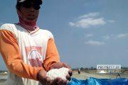 Panen Raya, Harga Garam di Rembang Justru Anjlok