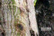 Ada Pohon 'Kencing' Bikin Geger Warga di Rembang