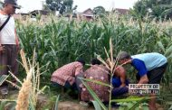 Mayat Kakek Lansia Ditemukan Tergeletak di Area Sawah