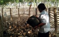 Harga Telur Bebek Turun Saat Musim Panen, Sontoloyo di Rembang Gelisah