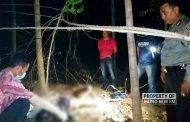Patroli Hutan, Petugas Temukan Mayat di Hutan Kebonharjo
