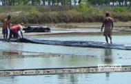 Mulai Turun Hujan, Petani Garam di Rembang Mulai 'Lepas Gas'