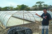 Petani Garam di Rembang Mulai Kembangkan Inovasi Tunnel dan Prisma