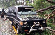 Pohon Roboh, Timpa Mobil di Rembang