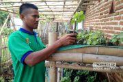 Pernah Ditertawakan Karena Nekat Bisnis Bibit Anggur, Kini Rutin Ekspor Ke Luar Jawa