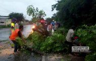 Sejumlah Pohon di Rembang Tumbang, Sebabkan Kemacetan Hingga Padamnya Listrik