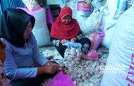 Harga Bawang Putih di Rembang Turun 25 Persen