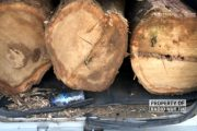 Penjarah Hutan Tertangkap, Angkut Kayu Curian Pakai Mobil APV