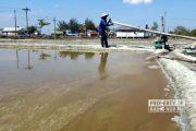 Harga Garam di Rembang Terjun Bebas, Petani Sebut Dugaan Penyebabnya