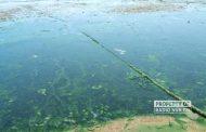 'Diserang' Limbah Lagi, Pantai Wates Rembang Berlumpur, Bau dan Bikin Gatal